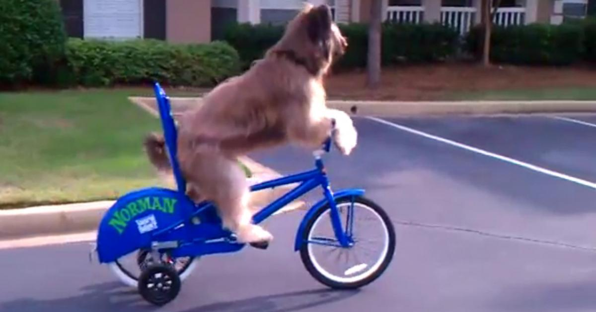 chien-velo-bicyclette